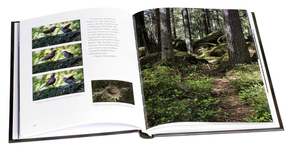 Metsän pikkusiivekkäitä aukeama